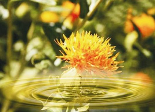新疆红花籽油怎么吃